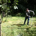 Scythe cutting in The Glade