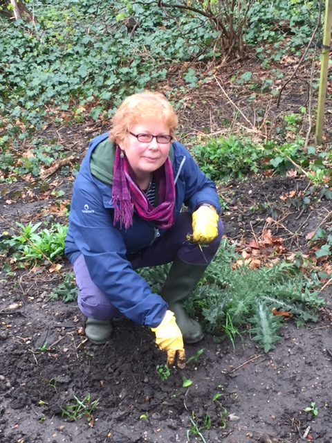 Ruth Cracknell weeding sycamore saplings