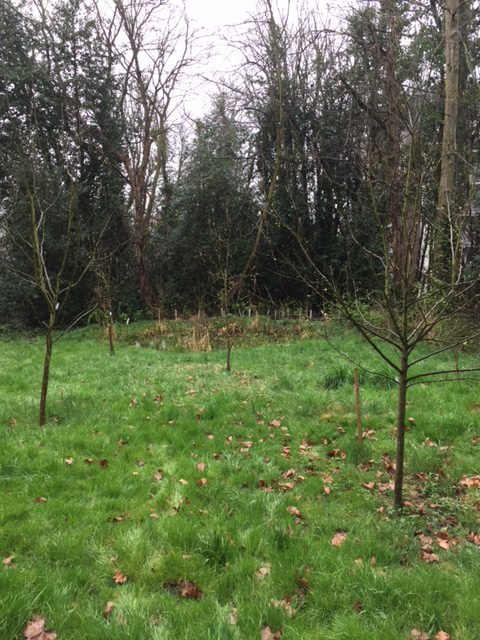 View of The Glade's fruit trees