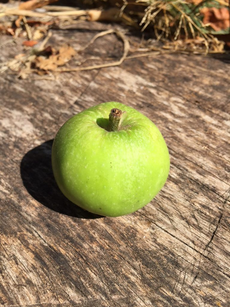 One of the few remaining apples not eaten by birds!
