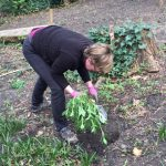 Volunteer planting newly divided plants