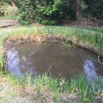 The newly created pond in The Glade area