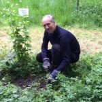 Westcombe Woodlands Chairman Tim Barnes at work weeding